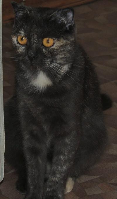 Тёська Буськова, 1 января 1998, Орск, id133395829