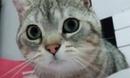 Cat DRUGS (Music: M()RE - Lie Use Die)