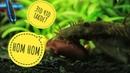 Рыбки едят отварную фасоль