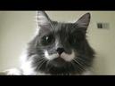 Приколы с котами собаками и другими животными 28 Jokes with cats dogs and other animals