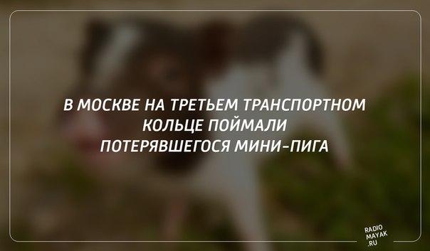 #РадиоМаяк #Новости