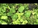 Увеличение урожая томатов огурцов кабачков
