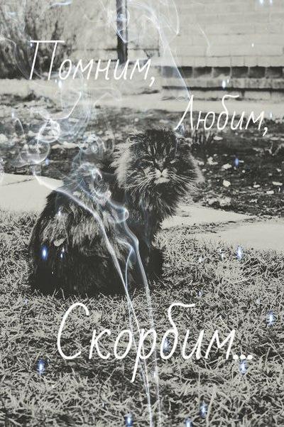 Алёнка Кондратьева, 6 января 1998, Новосибирск, id153562135