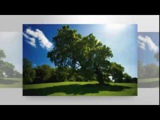 Najlepše narodne pesme Kosova i Metohije (drugi deo)
