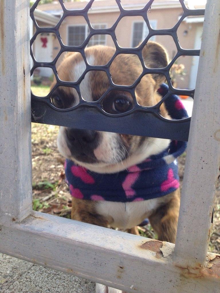 """""""Мы подружились с соседским щенком и играем с ним через ограду"""