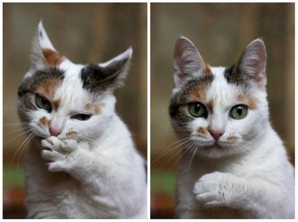 Красивые и профессиональные фото котов 99XoItdhOTg
