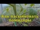 Как пасынковать помидоры в теплице Пасынкование томатов в грунте в парнике жизнь в деревне