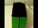 Когда картонная коробка-лучшая игрушка кота