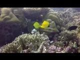 Maldives coral reef Hideaway Beach Maldives House Reef august 2015