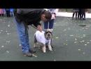 фестиваль Собаки в городе 7 октября в городском парке