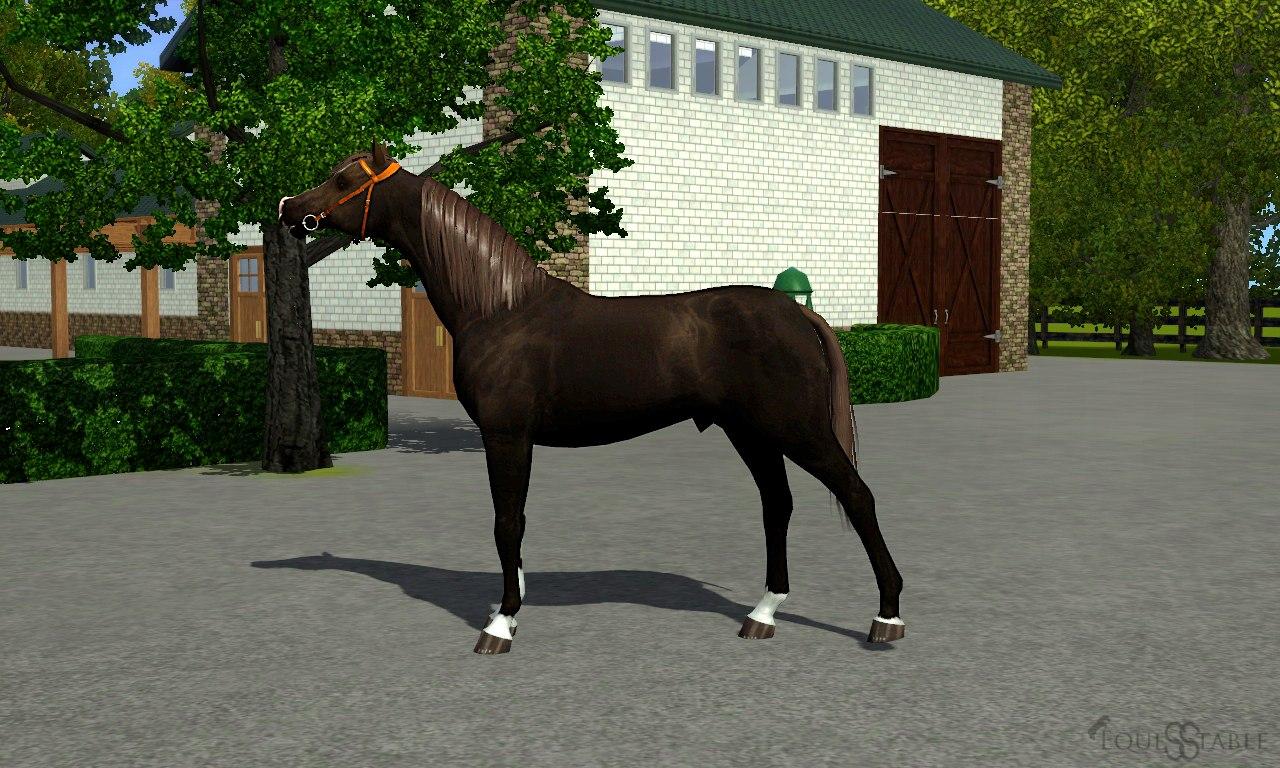Регистрация лошадей в RHF 1.2 Pi5UmEKUML8
