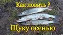 Рыбалка осенью на спиннинг! Щука клюет всегда на этот воблер