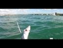 Акула в Севастопольской бухте. Подводная охота на Чёрном море в Крыму