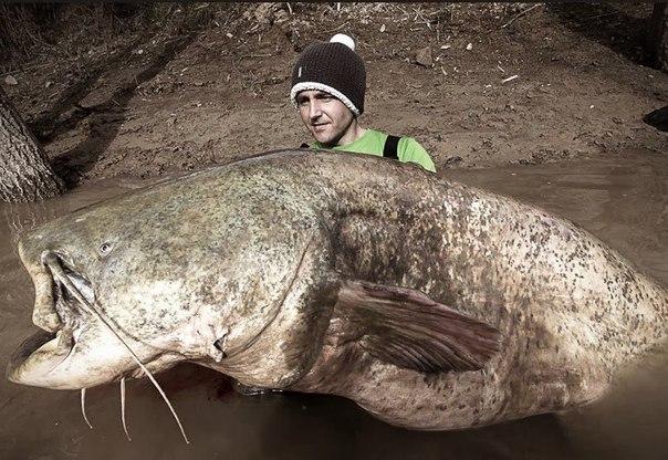 Видео о рыбалке Ловля сома