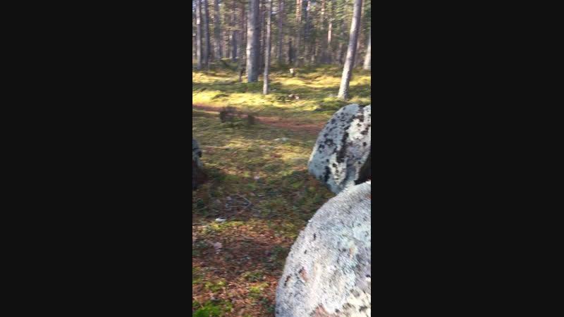 Ладога Камни