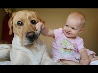 Best Babies Laughing Hysterically at Dogs Compilation 2012 [HD]