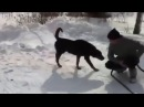 Собака-обоссака!