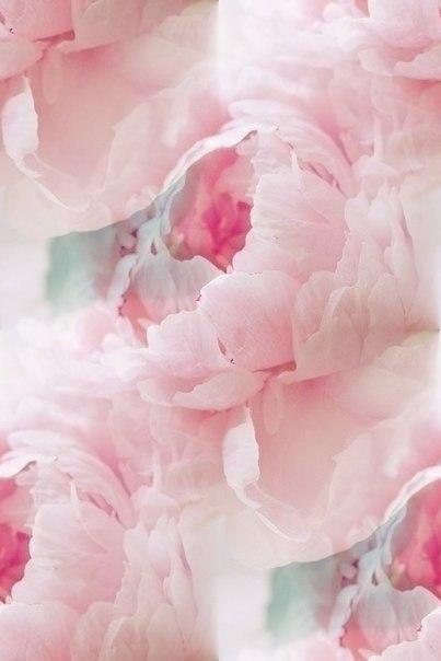Цветочные и растительные фоны - Страница 2 RRQz0FpnjDs