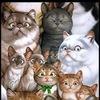 ВОЛОНТЕРСКИЙ МИНИ-ПРИЮТ: кошки в добрые руки.