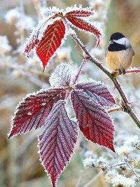 Зима... Морозная и снежная, для кого-то долгожданная, а кем-то не очень любимая, но бесспорно – прекрасная.  E8TuNo7Brqk