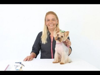 Groom Tv Br - Korean Puppy Clip (Tosa japonesa) - Adriana Skolimoski - Full HD #75