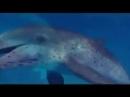 Aquatic dance DOLPHIN - Vangelis