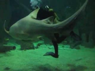 Акула-нянька в Sochi Discovery World Aquarium