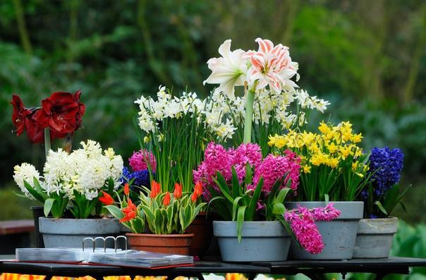 выбираем домашние цветы вам нравятся горшечные растения если вы хотите, чтобы они служили украшением вашего интерьера, радовали вас своим красивым внешним вид, следуйте этим