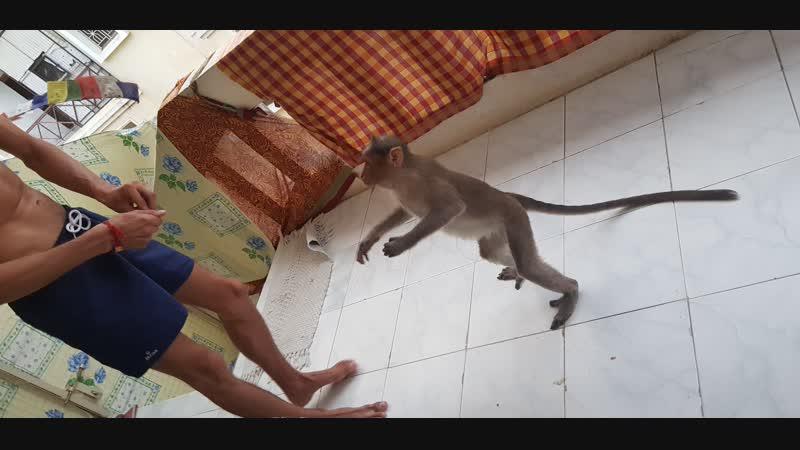 Дал по жопе обезьяне! Смех, веселье, сострадание 🤭🐒