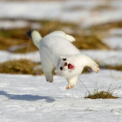 Happy Animals, 6 ноября , Санкт-Петербург, id222525040