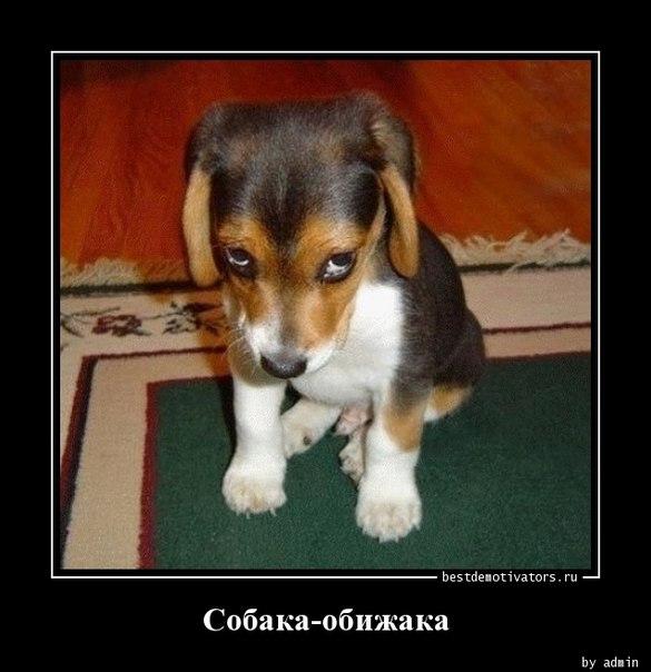 Собака-обижака: