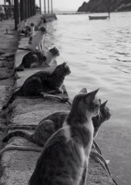 Коты в ожидании рыбаков с уловом.