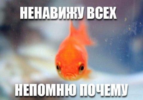 http://cs14110.vk.me/c7006/v7006638/a3da/roPKyBUewng.jpg