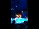 цирк попугаи