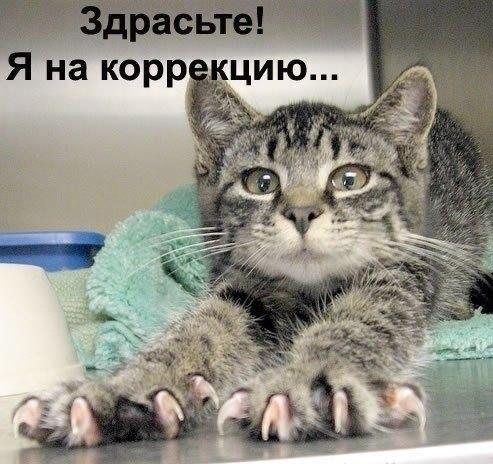 http://cs421022.vk.me/v421022345/5b2a/f15W4scmO9s.jpg