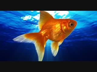 Каждый вечер рыбка ждет своего хозяина. Узнай, почему)))