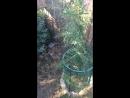 Зоопарк Поляна сказок Крым