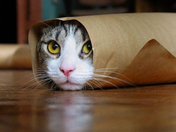 20 открытий, которые вы сделаете, когда заведете кота: ↪ Первое открытие — прямо в точку!