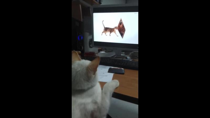Любимая передача кота Тайсона