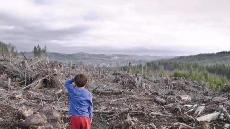 Сибирь станет пустыней Как китайцам продают русский лес