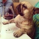 Каждый раз, когда официант наливает вино для дегустации, а ты пытаешься сделать вид…