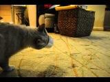 Кот поел сметану