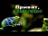 Компромат на Коломойского: