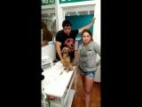 Садисты в Новосибирске скинули собаку с 4 этажа