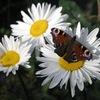 Краса природи!!!!!!!!!!!!!!