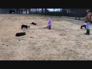 У собак тимплей лучше чем у твоих тимейтов (VHS Video)
