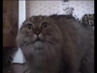 В Перми умер NONONONO Cat  кот-мем по кличке Маркиз
