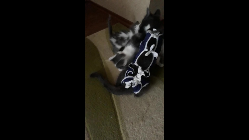 Фрося встречает котят » Freewka.com - Смотреть онлайн в хорощем качестве