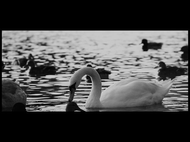 VOCES8: Nunc Dimittis - Arvo Pärt