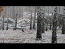 Вырубка Мещанского леса